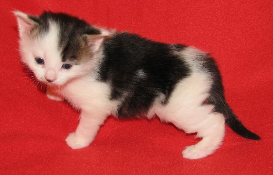 Naše mačky a mačiatka  Our cats+kittens  e1dacb3e0df